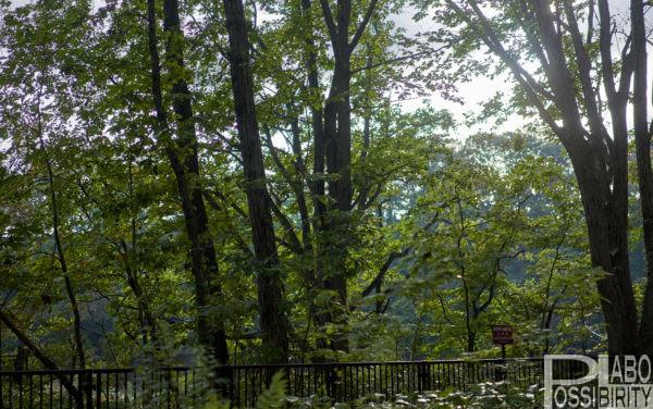 古山貯水池自然公園オートキャンプ場は薪割り焚火