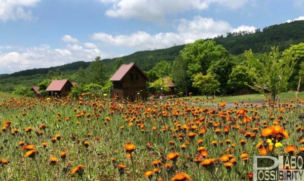 北海道人気のキャンプ場オープン・営業はいつから&予約開始日まとめ