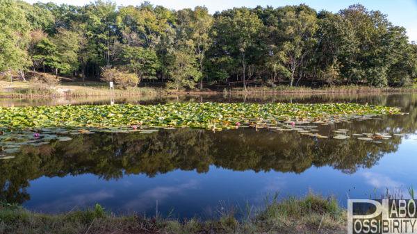 厚真大沼野営場,サイト情報,写真,2020年,利用者増加