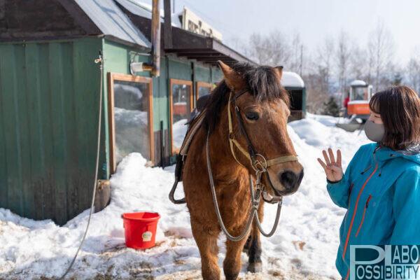 レイクトーヤランチ,ホーストレッキング,乗馬体験,洞爺湖,おすすめ観光,ネイチャーガイド,冬,時間,予約,料金,プラン,キャンセル料金,服装,